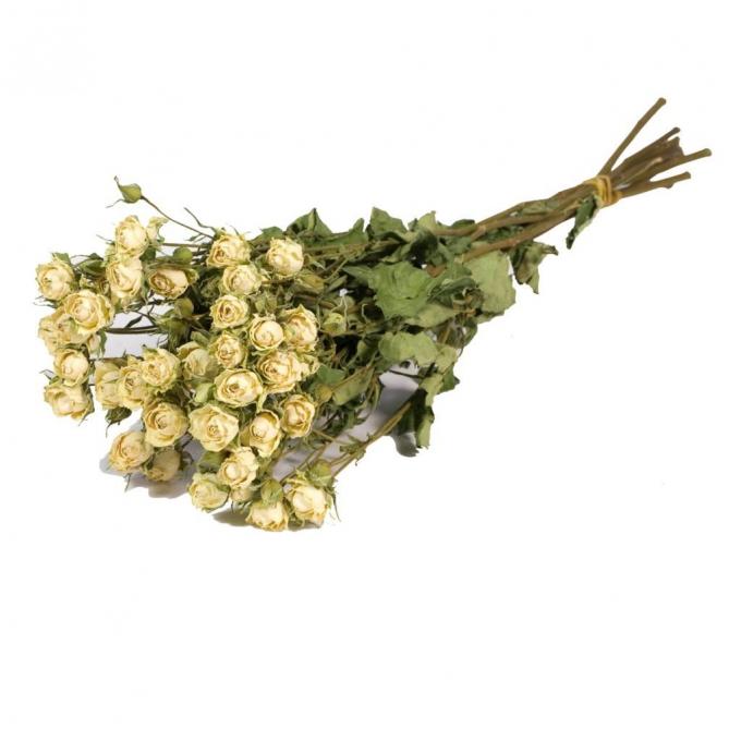 Roses blanches séchées