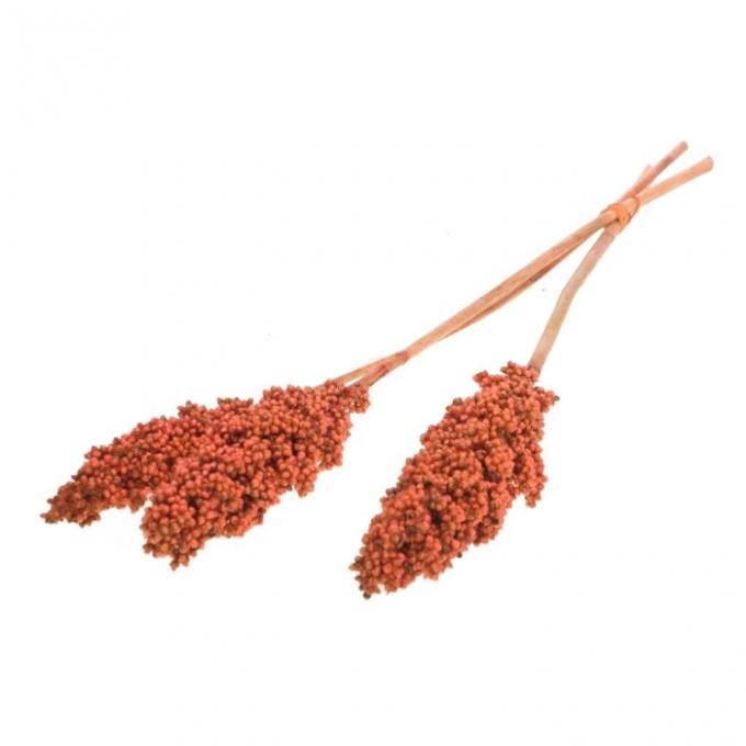 Maïs indien séché orange brûlé