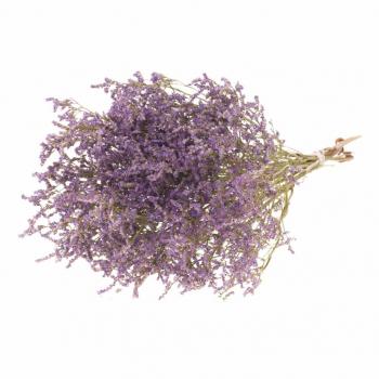 Statice Tatarica misty violet