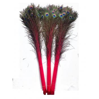 Plume de paon rouge long