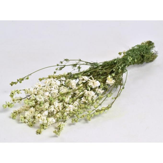 Delphinium séché blanc