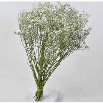 Gypsophile séchées blanc 5 tiges