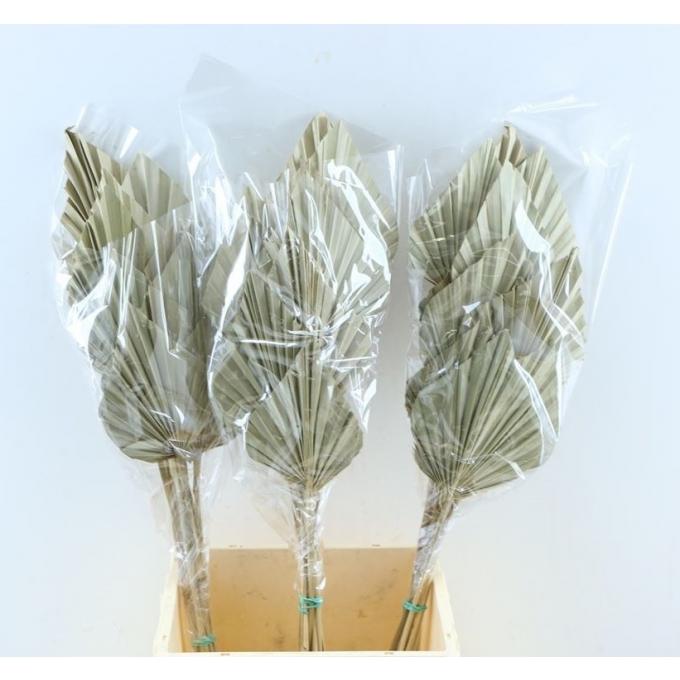 Spades Spears Palm mini naturel par 10 spades de palm