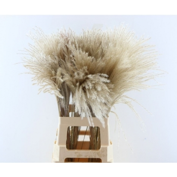 Herbe Fluffy Reed plumes