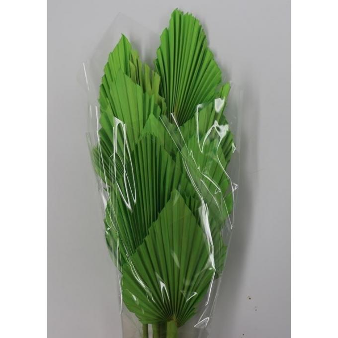 Spades Spears Palm pomme vert