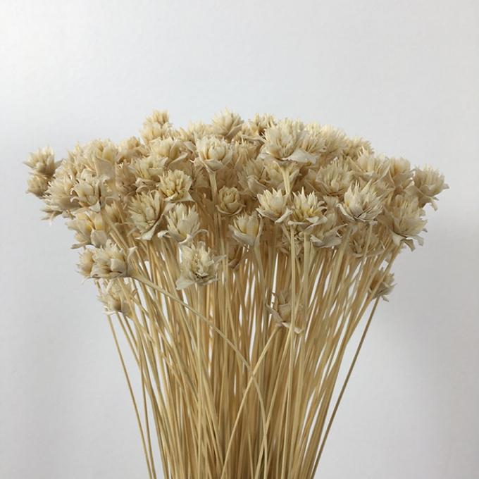 Hill flower blanchi