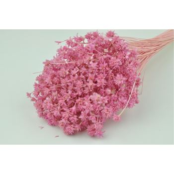 Hill flower blanchi rose