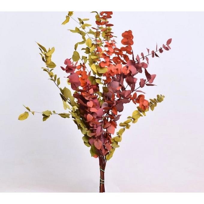 Mélange d'eucalyptus stuartiana conservé
