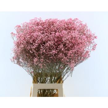Gypsophile séchées teinté rose